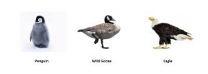 Penguin  vs  Wild Goose  vs  Eagle
